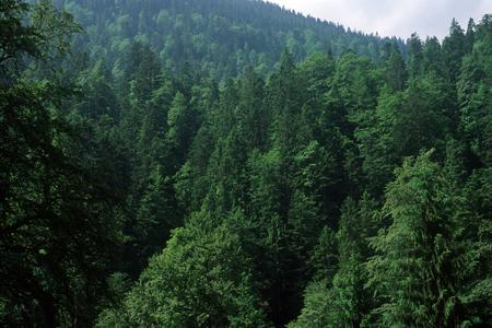 Bergmischwald, Reintal, Zugspitzgebiet