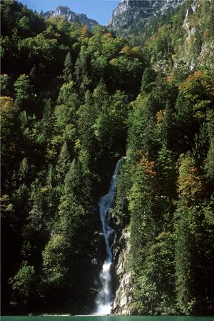 Bergmischwald am Königsee