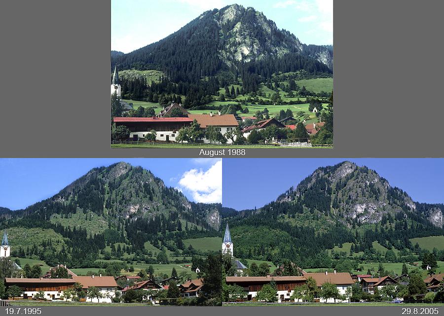 Schutzwald bei Bad Hindelang im Allgäu