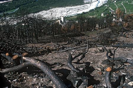 Der Klimawandel begünstigt auch Waldbrände