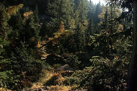 Lärchen-Fichten-Wald, Timmelsjoch, Österreich, 1986