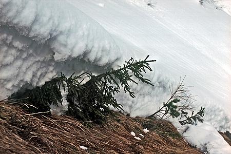 Schneeschub