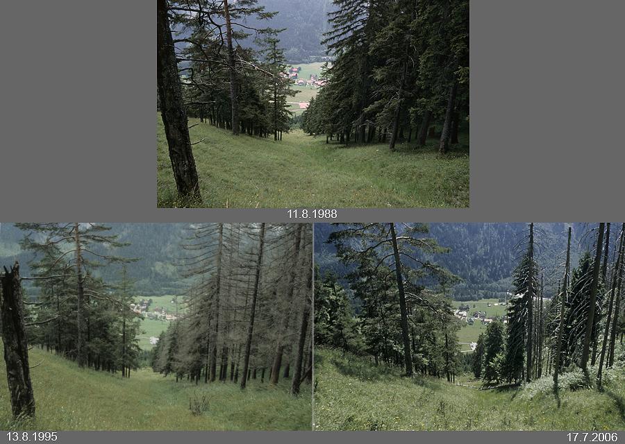 Schutzwald über Hinterstein im Allgäu