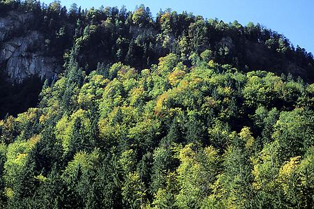 Bergmischwald, Königsee, Bayerische Alpen, 6.10.1997