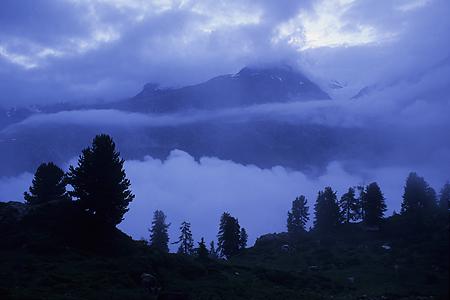 Arven, Aletschwald, Wallis, Schweiz, 11.7.1997