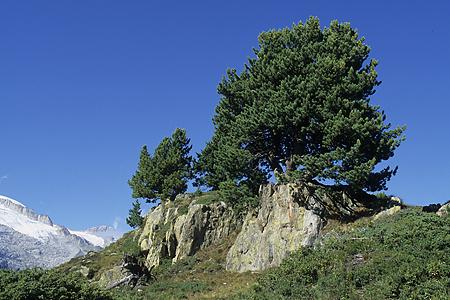 Arven, Aletschwald, Wallis, Schweiz, 27.8.2004