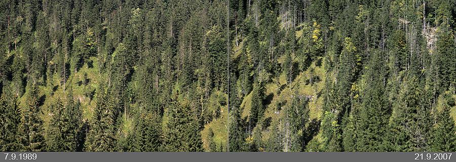 Beispiel: Bergwald an der Alpennordseite