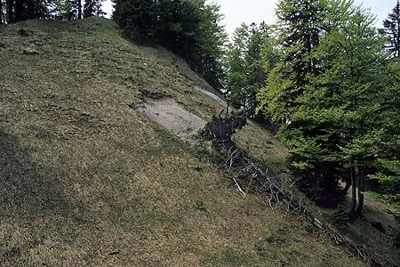 Kaputter Bergwald