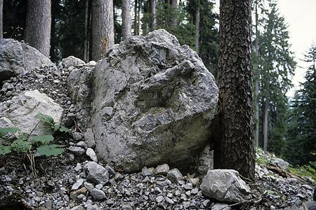 Schutzwald, Ragall, Großes Walsertal, Österreich, 3.10.1987