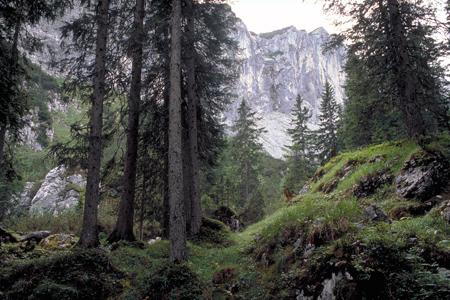 Subalpiner Bergfichtenwald im Reintal, Zugspitzgebiet